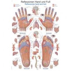 Plakat Reflexzones Hånd og Fod 70X100 cm.
